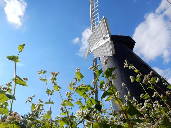 brixton windmill and buckwheat