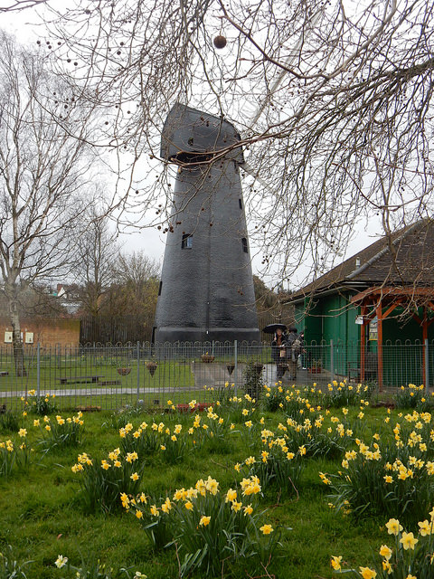 daffodils and brixton windmill